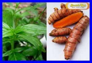Obat Panas Anak Herbal